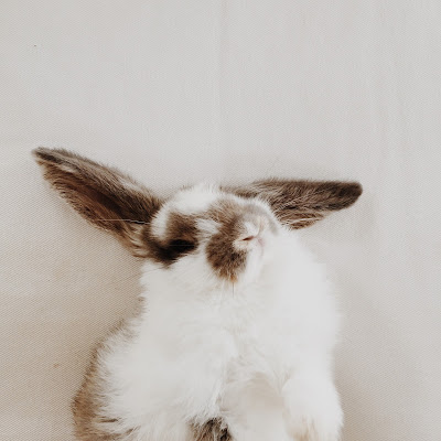 Meet Louie the Lop