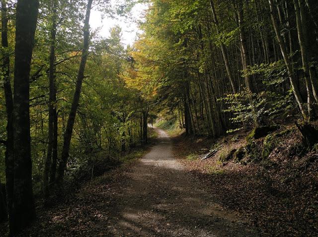 El camino está muy bien, sin ramas ni grandes zonas de piedra, por lo que puedes encontrar bicicletas a una velocidad excesiva