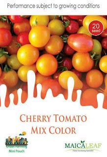 benih-tomat-cherry.jpg
