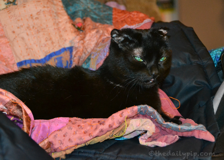 Confessions of a non-DIY Dog Mom: Black cat makes a DIY cat bed on a pile of coats