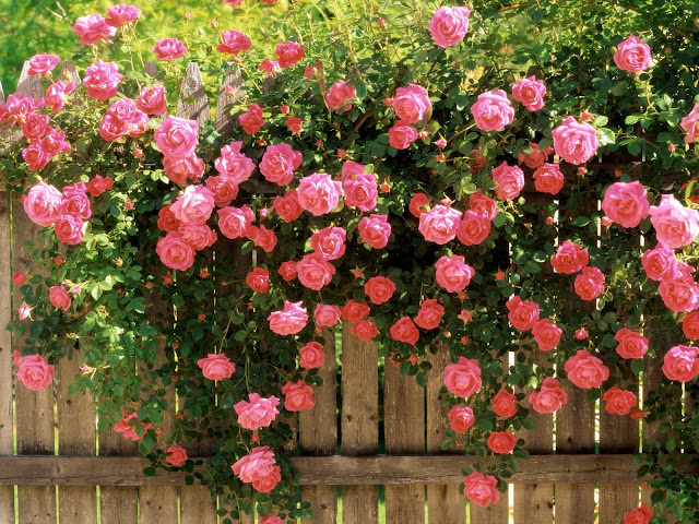 احلى صور ورود و صور زهور 2020 Best Photo Rose Flower عالم
