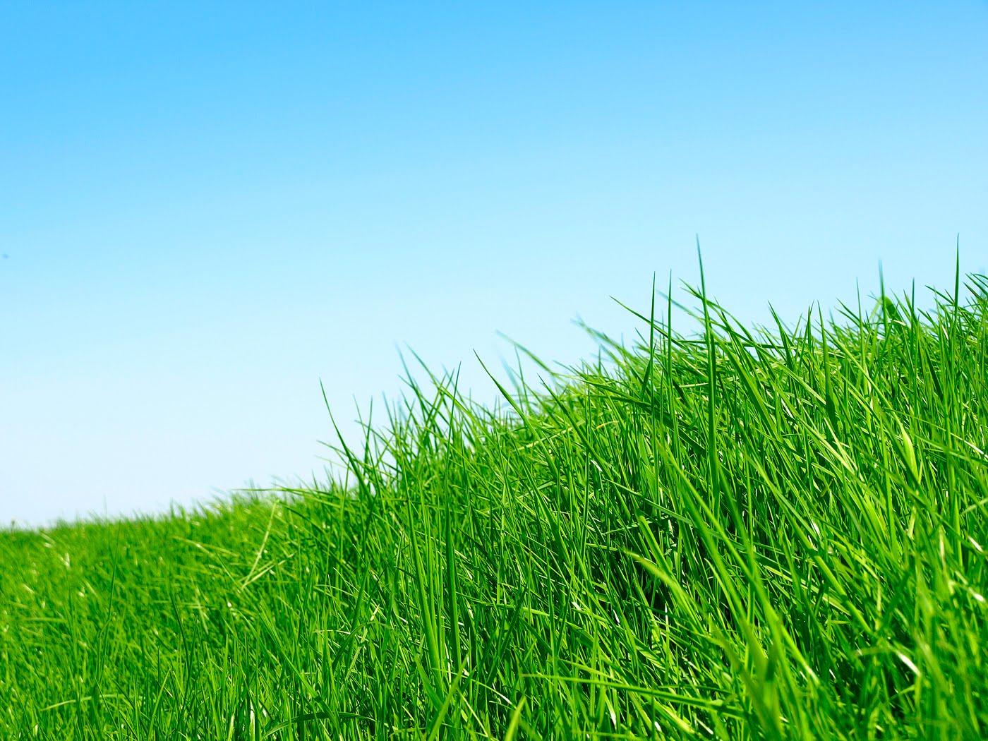 Grass Wallpapers - Wallpapers HD