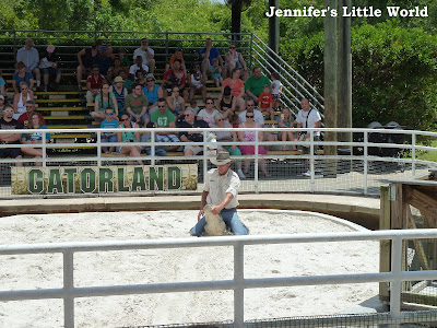 Alligator wrestling at Gatorland, Orlando