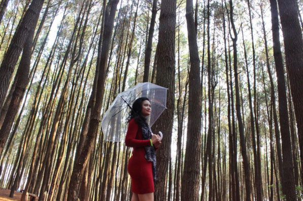 Hutan Pinus Yogyakarta