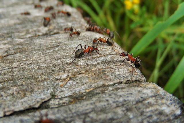Kehidupan Rahasia Semut