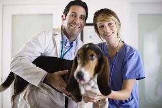 Al servicio de la salud publica y animal