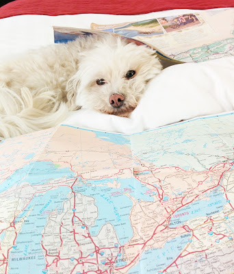 When traveling with your dog, keep an eye out for any sign of distress or illness.  We expect pet friendly places to be safe, but there could be dangers lurking!