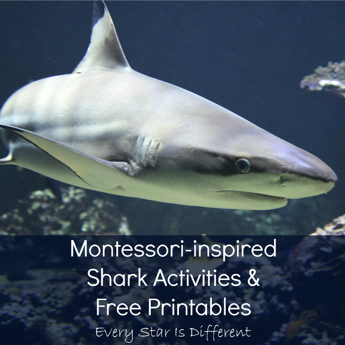 Montessori-inspired Shark Activities, Printables and Resources