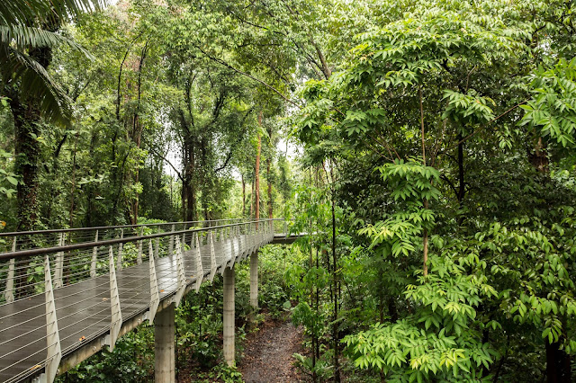 singapur, barvy, budovy, cestování, svět, botanická zahrada