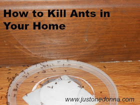 how to kill ants in your home just one donna. Black Bedroom Furniture Sets. Home Design Ideas