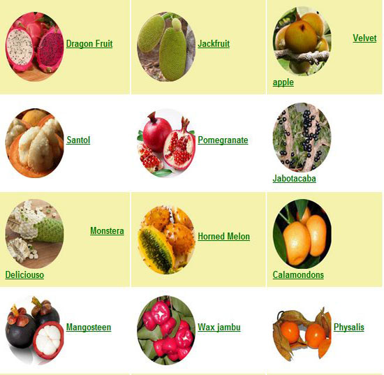 Asian Fruit List