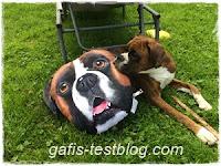 Boxerkissen mit Boxer Amy