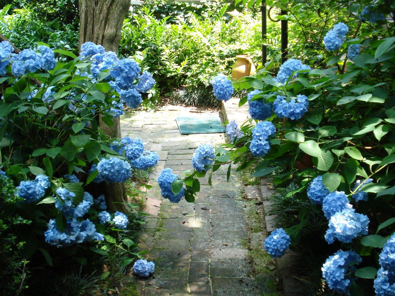 Sherri S Jubilee Wing Haven Gardens Part Ii