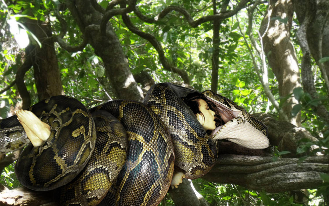 The pest control  team arrived at 8am and took about 30 minutes to capture the python, which was later released in a forested area.