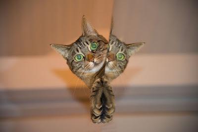 Kucing Menengok - Sekitar Dunia Unik