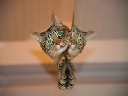 """Kenapa Kucing Menengok Saat Dipanggil """"Pus""""?"""