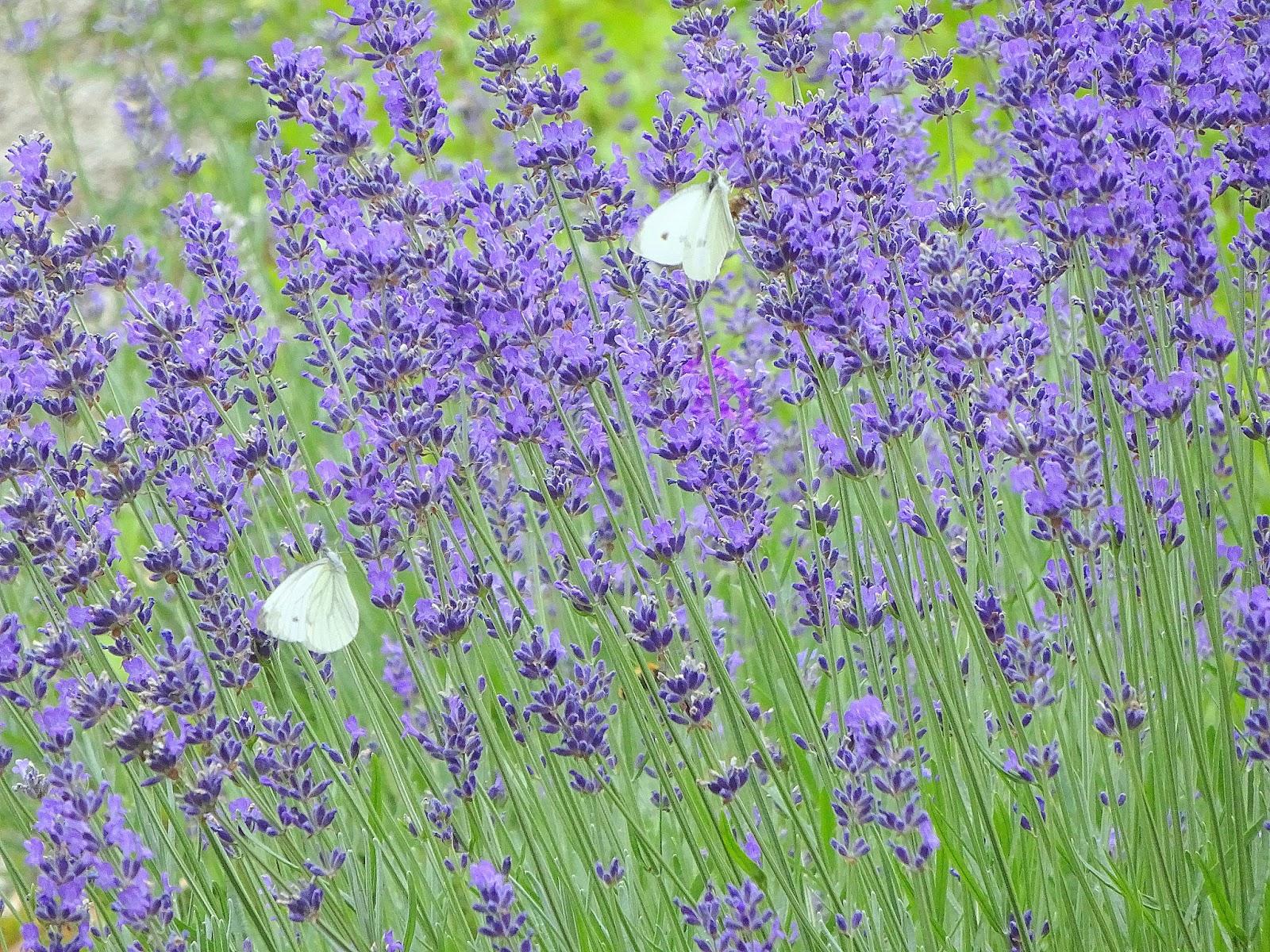 mintPatina Blaue Blumen