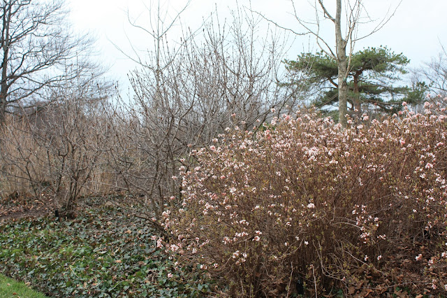 tree in bloom at Chicago Botanic Garden