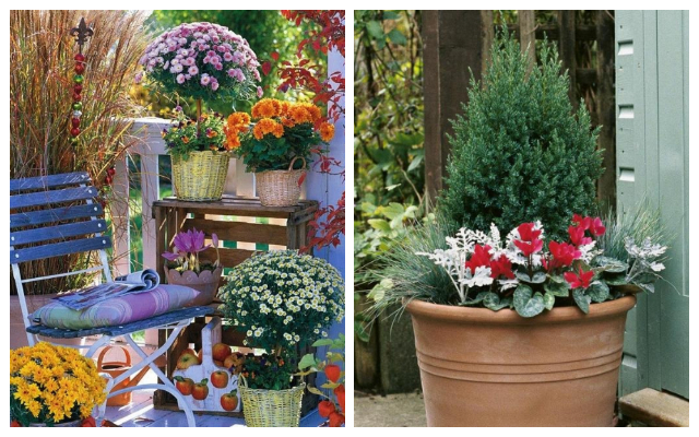 AUTUMN GARDEN IDEAS