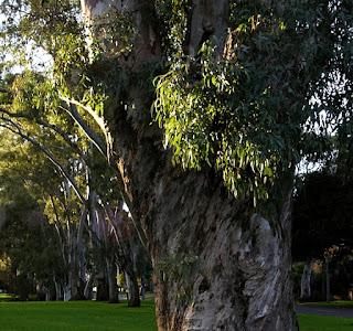 Park, Adelaide.