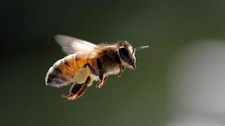 Sembrar plantas para salvar a las abejas
