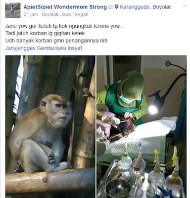 monyet-serangan-karanggede