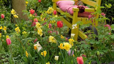 Bulbos de flor de primavera: grupos y frecuencia de floración