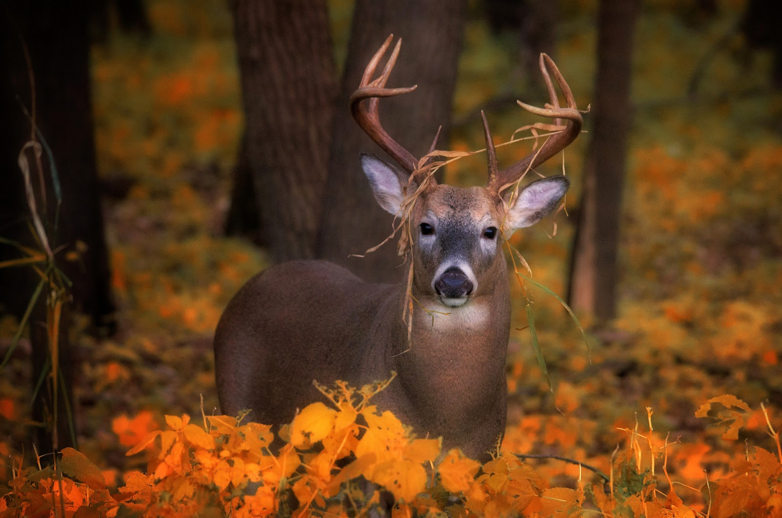 Fonds d 39 cran automne flamboyant fonds d 39 cran hd - Photo d automne gratuite ...