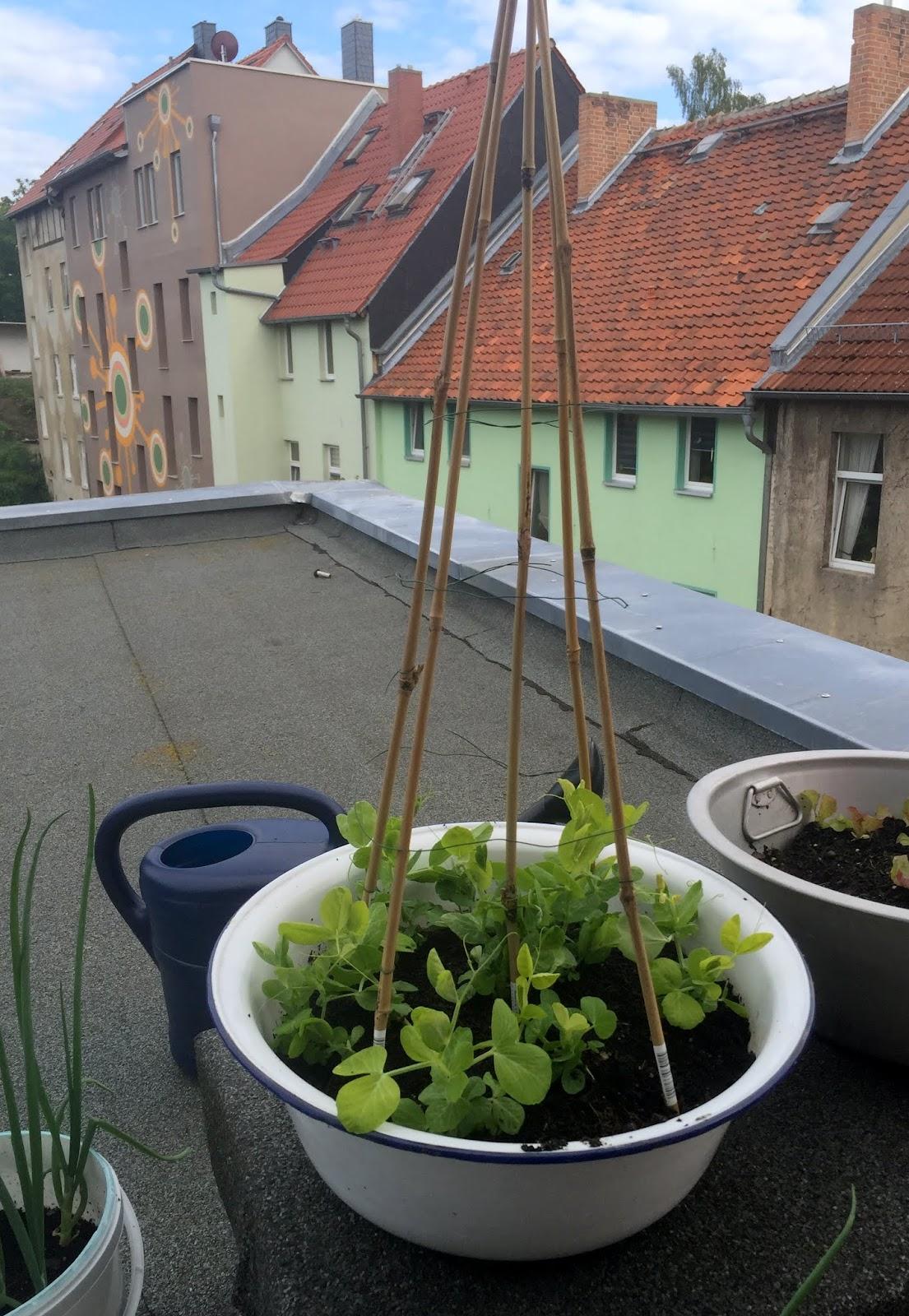lanisleckerecke: balkongarten 2.0 (werbung ebay home & garden)