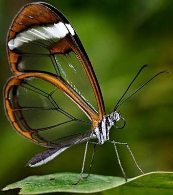 Foto de un mariposa de perfil