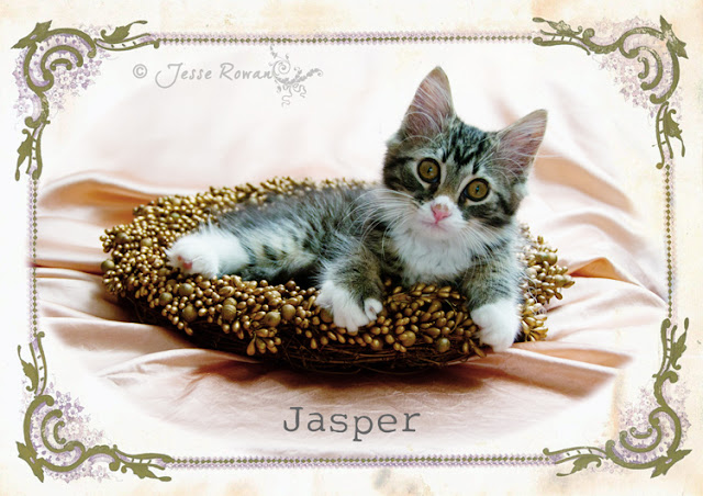 Jasper my new kitten by Lace Age Girl