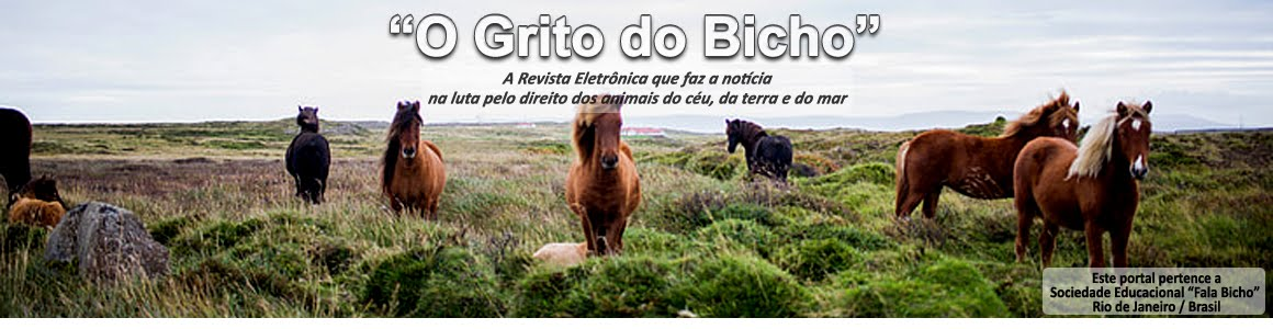 O GRITO DO BICHO