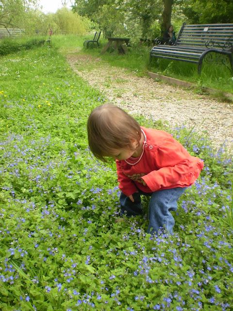 Eldest Examining Flowers