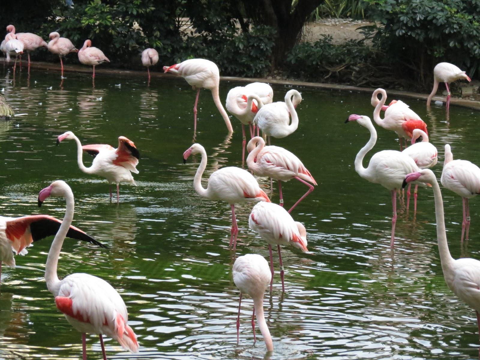 外國月亮: 九龍公園鳥湖的紅鸛