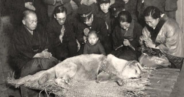 Χάτσικο: Ο σκύλος που με το θάvατό του έκανε μια ολόκληρη κοινωνία να βυθιστεί στο πένθος