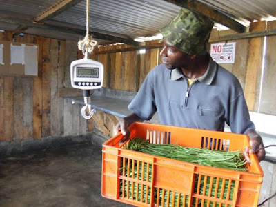 App helps Kenya's small farmers tackle pests, map crops