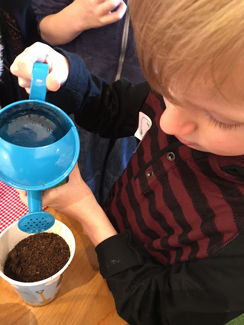 watering cress seeds