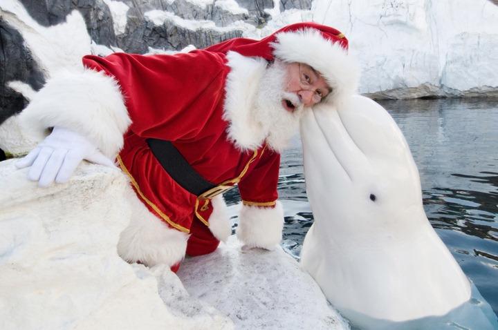 Delfin Blanco Besando A Santa Claus