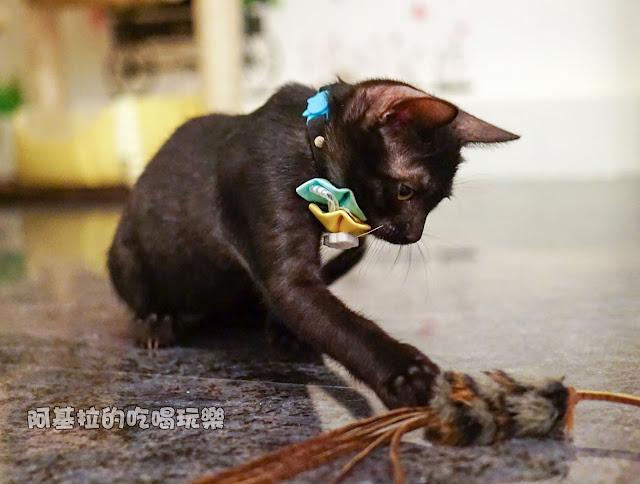 14589571 1099289840124260 7982242278420527332 o - 熱血採訪 朵貓貓咖啡館 - 貓咪餐廳