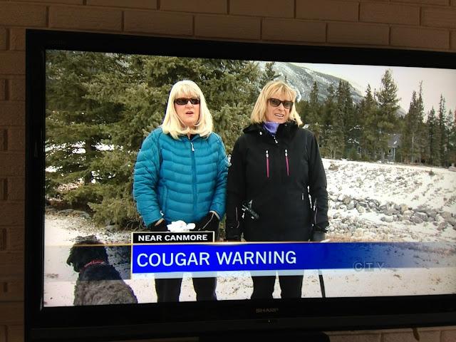 Funny News Cougar Warning Photo