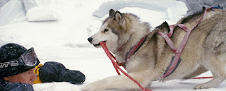 eight below bruce greenwood