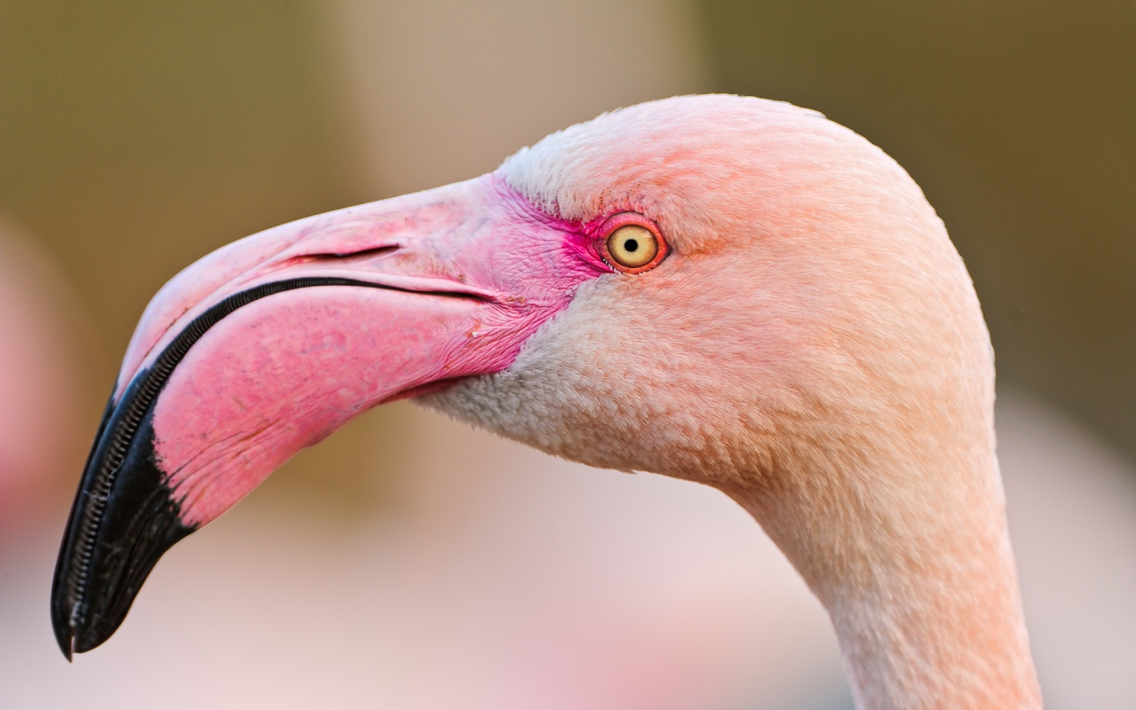 Most Beautiful Wallpapers Of Animals Animals Zoo Park Flamingo Wallpapers Pink Birds Wallpapers