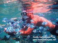 wisatawan bermain ikan di karimun