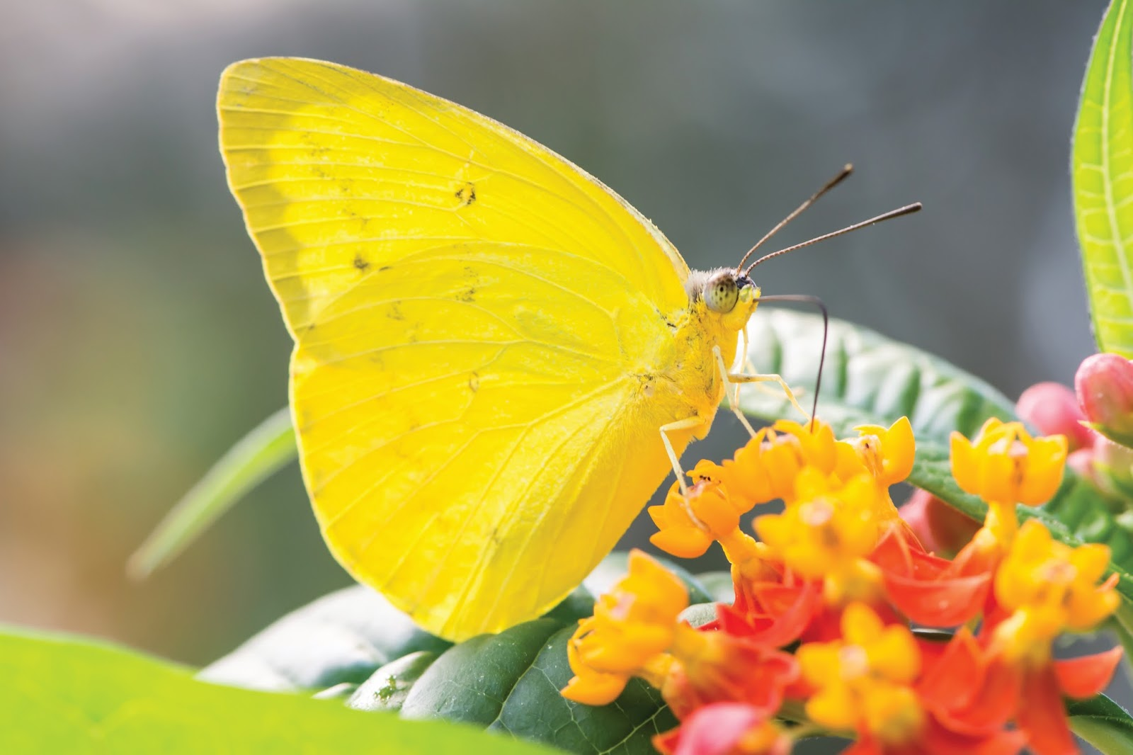 Woodland Park Zoo Blog: Butterfly Wings all-ages coloring ...