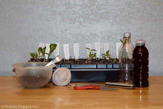 DIY self watering planter