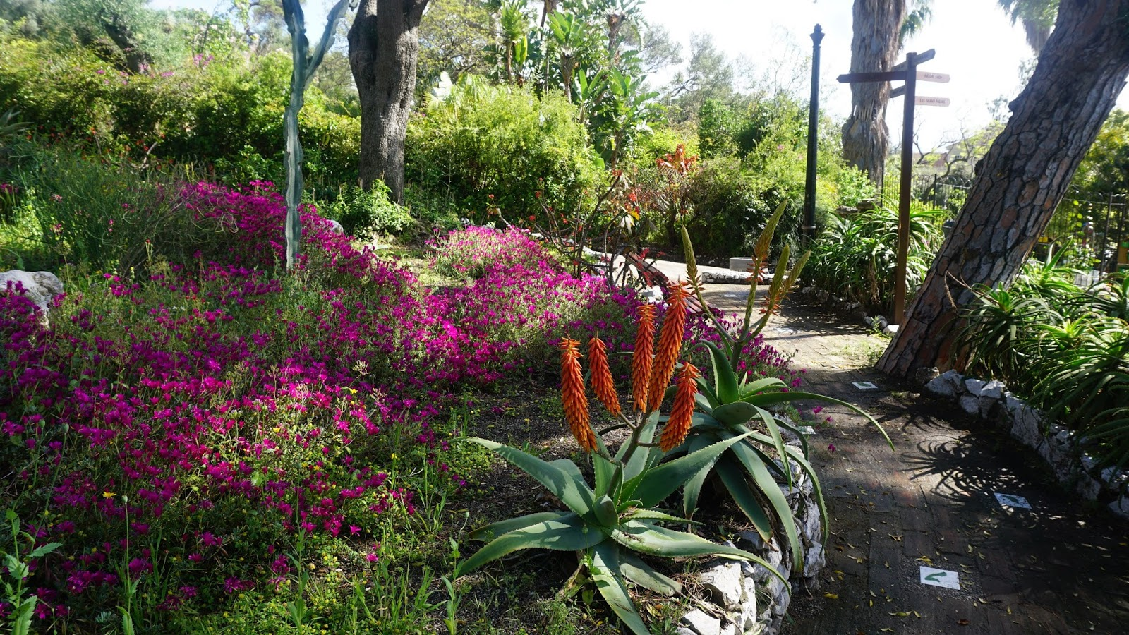 Ogród botaniczny Alameda na Gibraltarze