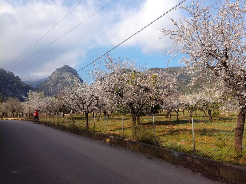 Foto: località Caimari, Mallorca