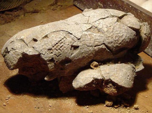 Gigantes metidos en rocas _Huevo%2Bde%2Bdinosaurio%2Bcon%2Bc%25C3%25B3digo%2Bde%2Bbarras