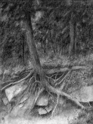 art drawing charcoal forest tree root evergreen