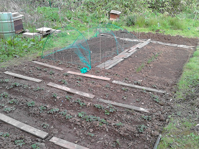 A much less weedy plot aftre one year 80 Minute Allotment Green Fingered Blog